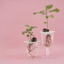 Sprout kweekschaaltje - Botanopia