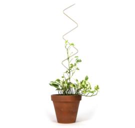 Plantensteun goud Zigzag - Botanopia