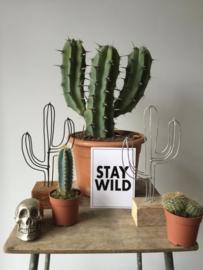 Draad cactus goud - BLUFT