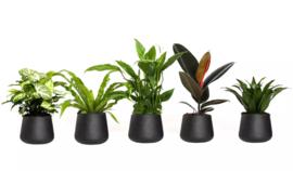Luchtzuiverende | Kamerplanten