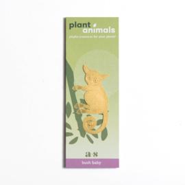 Planten diertje galago