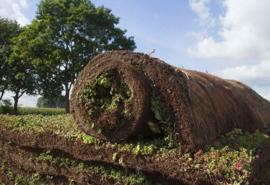 Vegetatiematten