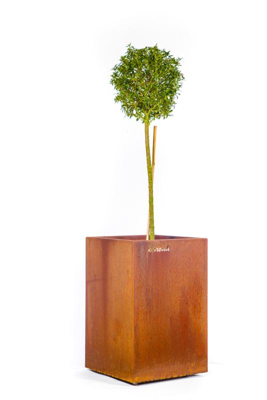 """Bloembak """"Pistoria"""" 40 x40x60 cm (bxlxh)"""