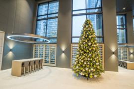 Kerstboom | Dublin