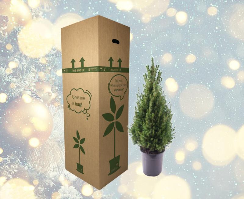 Kerstboom per post (speciaal voor de thuiswerkers)