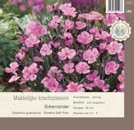 VIPS Dianthus gratianopolitanus 'Dinetta Soft Pink'