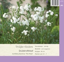 VIPS Achillea ptarmica 'The Pearl'