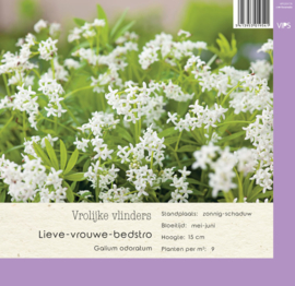 VIPS Galium odoratum