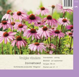 VIPS Echinacea purpurea 'Magnus'