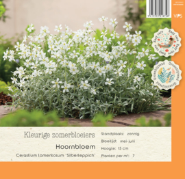 VIPS Cerastium tomentosum 'Silberteppich'