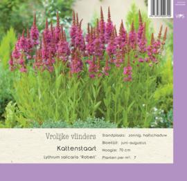 VIPS Lythrum salicaria 'Robert'