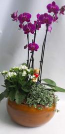 planten mix met orchidee
