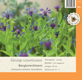 VIPS Centaurea montana 'Grandiflora'