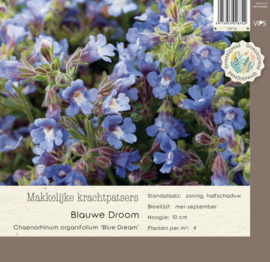 VIPS Chaenorhinum organifolium 'Bleu Dream'