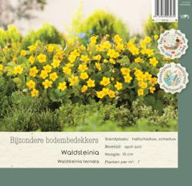 VIPS Waldsteinia ternata