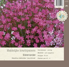 VIPS Dianthus deltoides 'Leuchfunk'