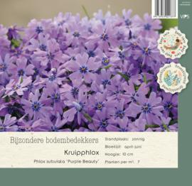 VIPS Phlox subulata 'purple Beauty'