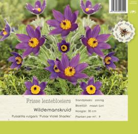 VIPS Pulsatilla vulgaris 'Pulsar Violet Shades'
