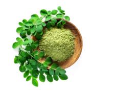 Concentraat uit moringablad bevat plantaardige eiwitten en vitamines