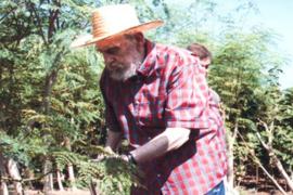 Fidel Castro en zijn obsessie met de moringa-boom