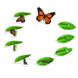 Reuze magnetische levenscyclus van een vlinder