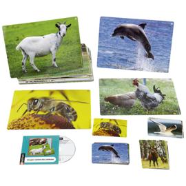 Prentenboek met dierengeluiden