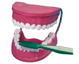 Tandenpoetsen doe je zo!