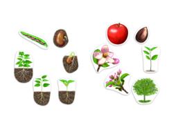 Reuze magnetische levenscyclus van een plant