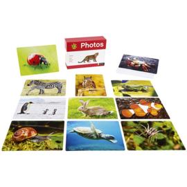 Fotobox dieren