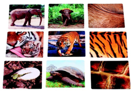 Vind het juiste dier