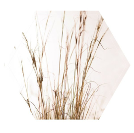 Muurhexagon grass, Label-R