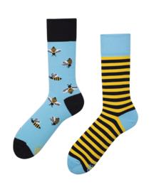 Bee Bee, regular