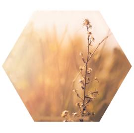 Muurhexagon nature, Label-R