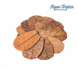 Aqua-Tropica Water-Natural Nano amandelboom bladeren - 12 stuks