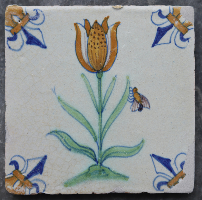 Tulp met insect