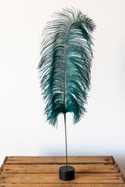 Struisvogel veer op voet