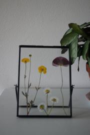 Lijst staand gevuld met Zeeuwse gedroogde bloemen