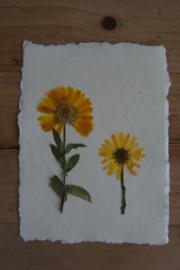 Kaart met gedroogde bloemen