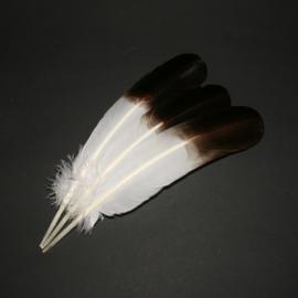 Veer wit met zwarte punt