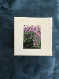 Mooi doosje met backflow Cones en keramische wierookhouder lavender
