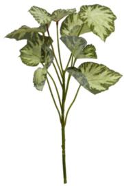 kunstplant Begonia Rex 45 cm zijde groen/wit