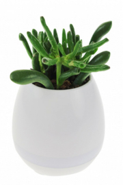 bloempot met licht en geluid 12 cm wit