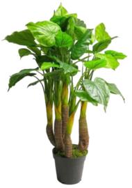 kunstplant Anthurium Avanti 120 cm zijde groen