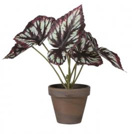 kunstplant Begonia in pot 30 cm zijde grijs