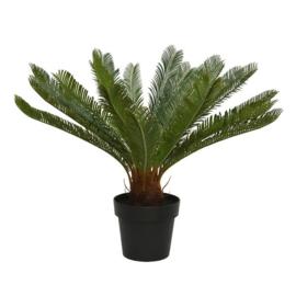 Varenpalm in pot kunststof Ø80-H60cm groen