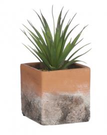 kunst-vetplant 8,5 x 10,5 cm groen/bruin