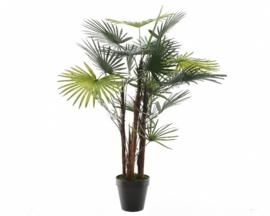 Fortunei palmboom in pot kunststof -H90cm groen
