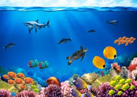 Categorie foto Onderwaterwereld
