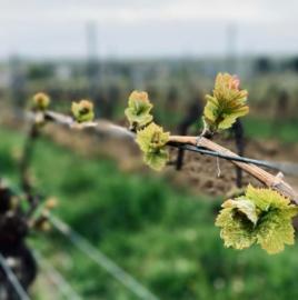 Proefdoos (6) nieuwe wijnen jaargang 2020