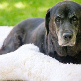 Huggle Hound Fleece Schapenvacht Beige XL